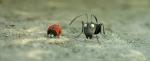 кадр №189496 из фильма Букашки 3D. Приключение в Долине Муравьев