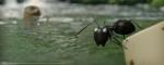 кадр №189502 из фильма Букашки 3D. Приключение в Долине Муравьев