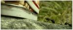 кадр №189505 из фильма Букашки 3D. Приключение в Долине Муравьев