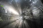 Однажды в лесу кадры