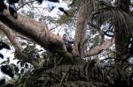кадр №189694 из фильма Однажды в лесу