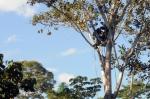 кадр №189697 из фильма Однажды в лесу