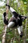 Остров лемуров: Мадагаскар кадры