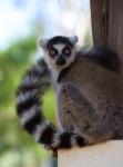 кадр №195627 из фильма Остров лемуров: Мадагаскар