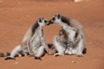 кадр №195628 из фильма Остров лемуров: Мадагаскар