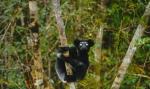 кадр №195631 из фильма Остров лемуров: Мадагаскар