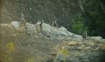 кадр №195634 из фильма Остров лемуров: Мадагаскар