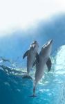 кадр №197548 из фильма История дельфина 2