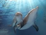 кадр №197549 из фильма История дельфина 2