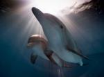 кадр №197581 из фильма История дельфина 2