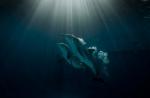 кадр №197582 из фильма История дельфина 2