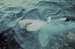 кадр №19837 из фильма Челюсти