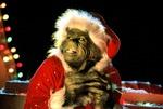 Гринч — похититель Рождества кадры