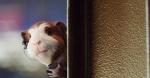 кадр №21630 из фильма Миссия Дарвина