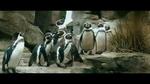 кадр №217543 из фильма Пингвин нашего времени