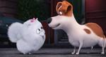 кадр №232929 из фильма Тайная жизнь домашних животных