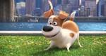 кадр №232934 из фильма Тайная жизнь домашних животных