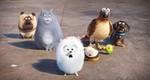 кадр №232939 из фильма Тайная жизнь домашних животных