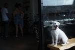 Его собачье дело кадры