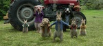 кадр №243456 из фильма Кролик Питер