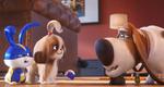 кадр №255343 из фильма Тайная жизнь домашних животных 2