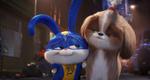 кадр №255345 из фильма Тайная жизнь домашних животных 2