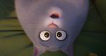 кадр №255353 из фильма Тайная жизнь домашних животных 2