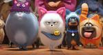 кадр №255356 из фильма Тайная жизнь домашних животных 2