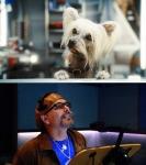 кадр №45627 из фильма Кошки против собак: Месть Китти Галор