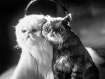 кадр №46840 из фильма Кошки против собак