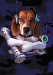 кадр №46842 из фильма Кошки против собак