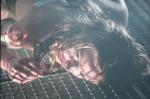 кадр №49816 из фильма Страх.com