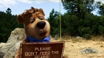 Медведь Йоги кадры