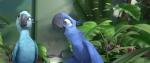 кадр №70499 из фильма Рио