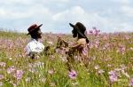 Цветы лиловые полей кадры