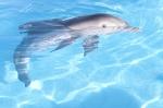 кадр №89528 из фильма История дельфина
