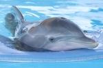 кадр №89536 из фильма История дельфина