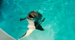кадр №89537 из фильма История дельфина