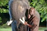 Белый слон* кадры