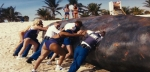 911: Мальчики по вызову кадры