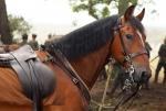 кадр №99069 из фильма Боевой конь