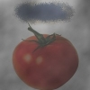 http://openid.yandex.ru/Lost-11/