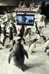 Пингвины мистера Поппера, другие