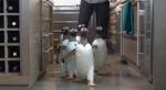 Пингвины мистера Поппера, кадры из фильма